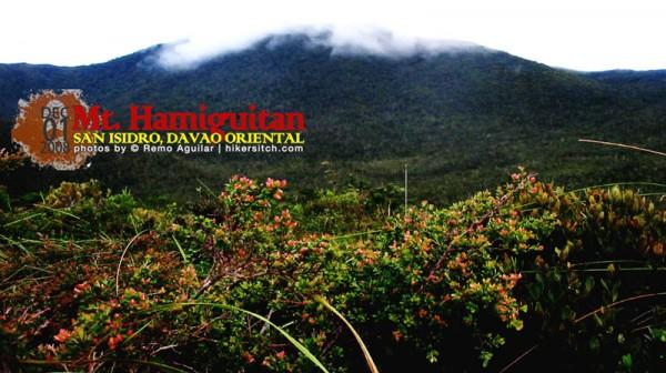 Mt.hamiguitan1